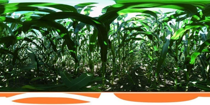 Panorama of CORN